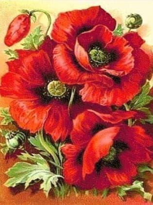 Червоні маки DM-006 Алмазна мозаїка