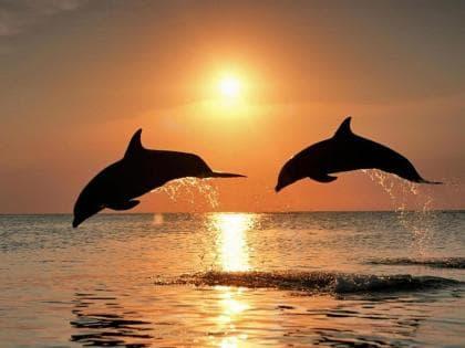 Дельфіни на заході сонця DM-022 Алмазна мозаїка