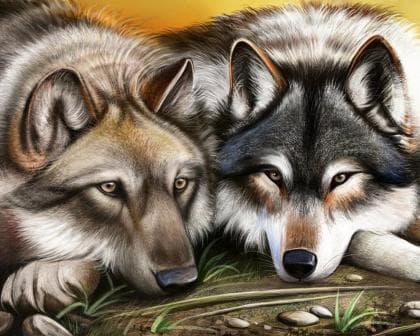 Вовки DM-102 Алмазна мозаїка