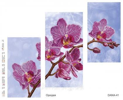 Орхідеї DANA-41 DANA