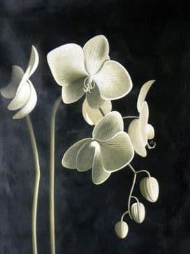 Цвіт орхідеї DM-115 Алмазна мозаїка