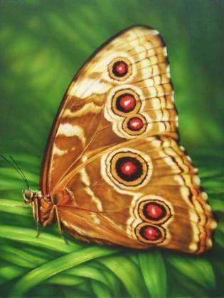Метелик Монарх DM-176 Алмазна мозаїка
