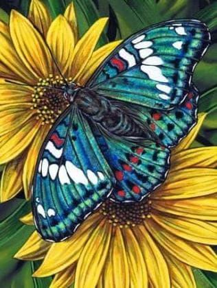 Метелик на гербері DM-178 Алмазна мозаїка