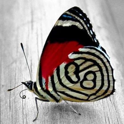 Яскравий метелик DM-179 Алмазна мозаїка