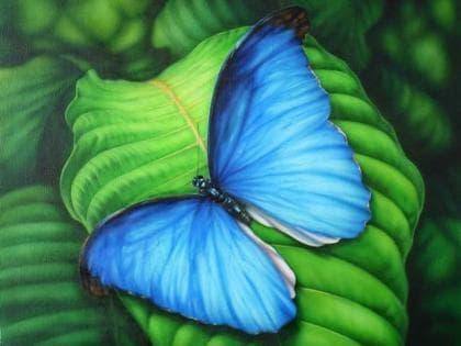 Синій метелик DM-181 Алмазна мозаїка