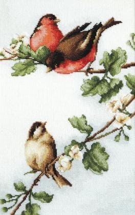 Пташки B216 Luca S