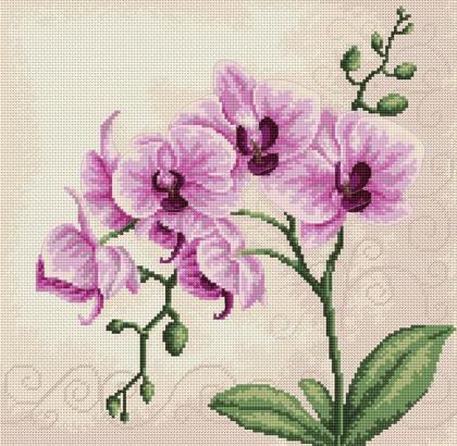 Орхідеї В2227 Luca S