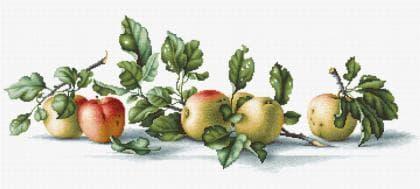 Яблуки В2265 Luca S
