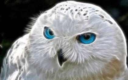 Біла сова DM-242 Алмазна мозаїка