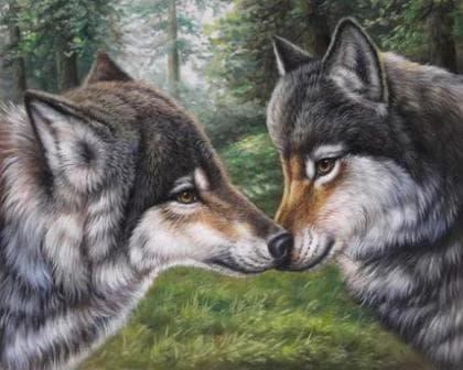 Закохані вовки DM-271 Алмазна мозаїка