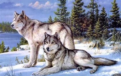 Пара вовків DM-276 Алмазна мозаїка