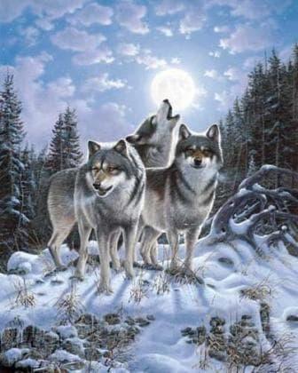 Стая вовків DM-279 Алмазна мозаїка