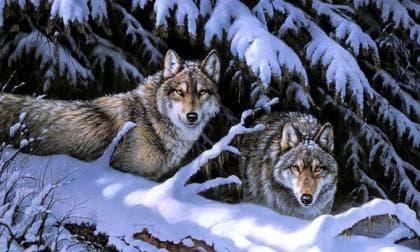 Вовки на снігу DM-280 Алмазна мозаїка
