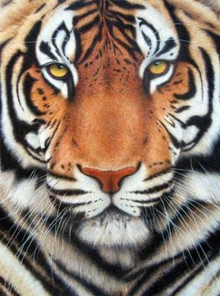 Тигр DM-282 Алмазна мозаїка