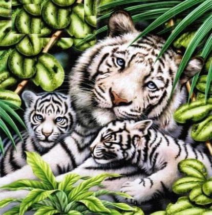 Біла тигриця з тигрятами DM-283 Алмазна мозаїка