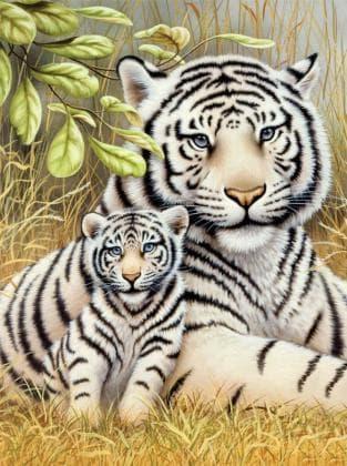 Любов тигриці DM-285 Алмазна мозаїка