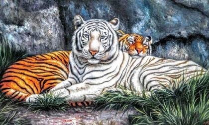 Тигри на відпочинку DM-288 Алмазна мозаїка