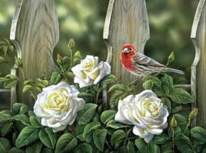 Птах на садових трояндах