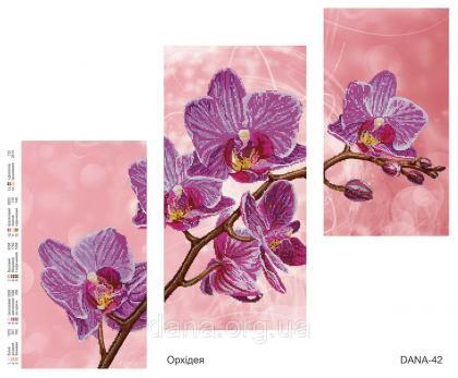 Орхідея DANA-42 DANA