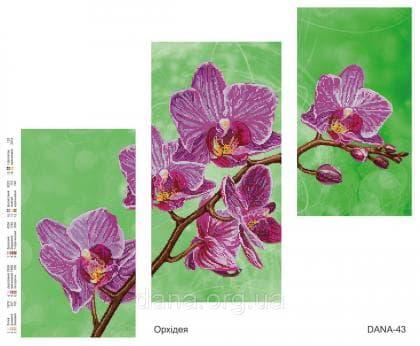 Орхідея DANA-43 DANA