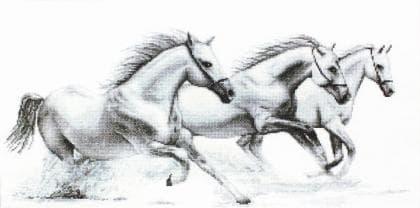 Білі коні B495 Luca S