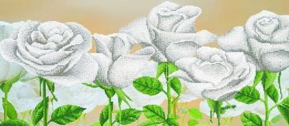Білі троянди А-076 Світарт