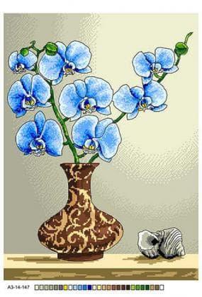 Орхідеї А3-14-147 Вишиванка