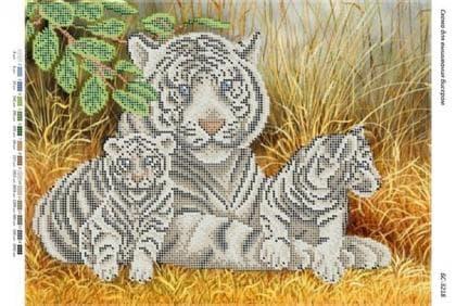 Сім'я тигрів БС-3218 ак Сяйво БСР