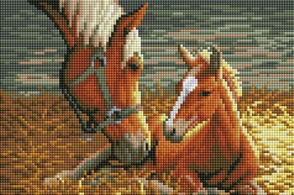 Коні DT707 Алмазна мозаїка IF