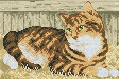 Котик DT704 Алмазна мозаїка IF