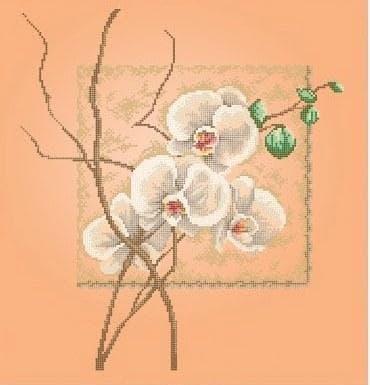 Орхідеї ЧВ-6008 Бісерок
