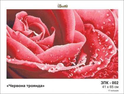 Червона троянда ЗПК-002 ак Золота підкова