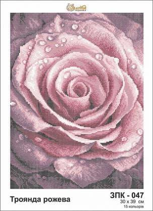 Троянда рожева ЗПК-047 Золота підкова