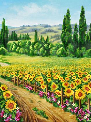 Поле соняшників