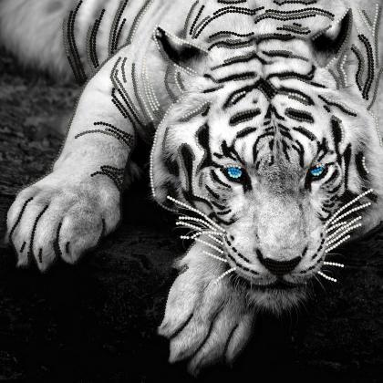 Сріблястий тигр TG-047b Світарт