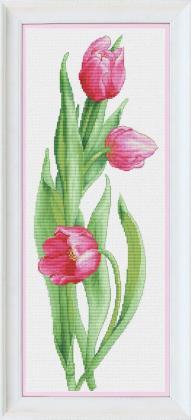 Рожеві тюльпани